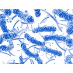 NUR150 - Multidrug-Resistant Organisms (1.0 HR)