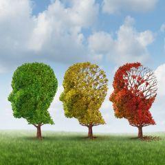 Series - 4 Hour Dementia Training Module B (4.0 HR)